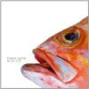 Clara Luzia – We Are Fish